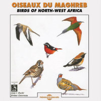 Birds Of North-West Africa – Oiseaux du Maghreb